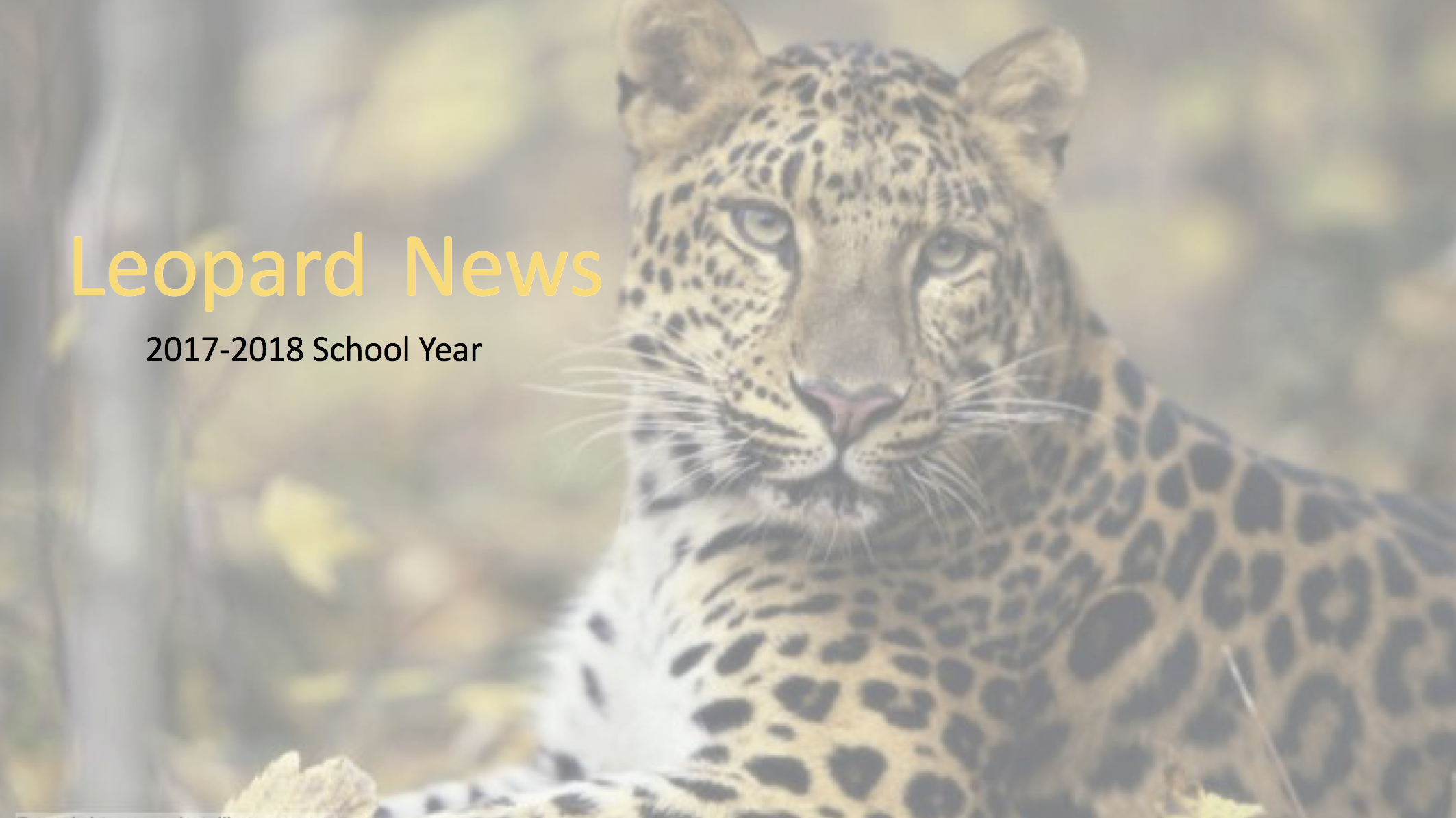 Leopard News Cover